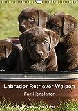 Labrador Retriever Welpen (Wandkalender 2015 DIN A4 hoch): Die Welpen sind los. (Monatskalender, 14 Seiten)