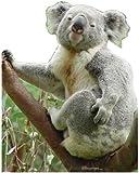 Pappaufsteller Koala Aufsteller Standup Figur Kinoaufsteller Pappfigur Cardboard Lebensgroß Life-Size Standup