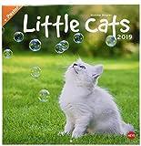 Wegler Little Cats Broschurkalender - Kalender 2019