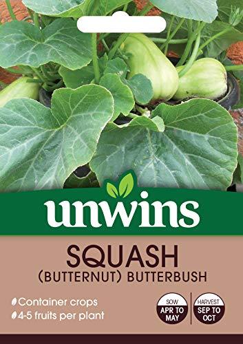 Unwins 30310641 Graines de courge (Butternut)