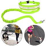 Cinghia Elastica Running dog Guinzaglio Piombo Sport Jogging Walking Collare Dell'animale Domestico Corda mano Libera vita del Cane Guinzaglio set Spedizione Gratuita (verde)
