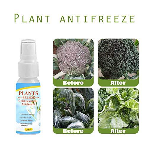 Pianta resistente al freddo e resistente al freddo, agente anticongelante liquido antigelo 2pcs agent 50 / 100ml