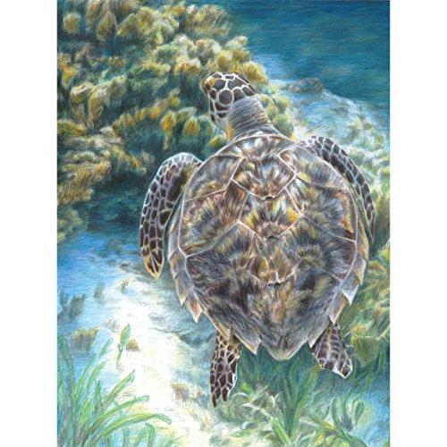 Royal Brush Farbe Bleistift durch die Anzahl Kit 22,2x 29,8cm -sea Schildkröte