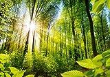 ARTBAY Wald Poster XXL, Kunstdruck - 118,8 x 84 cm, von Sonne durchfluteter, Zauberhafter, heimischer Wald, Deutschland | Wandposter, Fotoposter, Wandgestaltung, Hochauflösende Wanddekoration