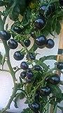 Indigo Rose 10 Samen ---Die etwas andere Tomatensorte mit violetter Farbe-- ***Sehr Gesund***