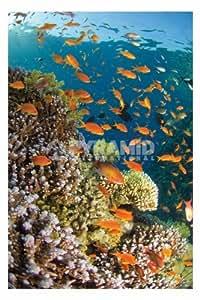 Waterworld–Poisson Tropical Océan Grand Art Poster animaux 61par 91.5cm