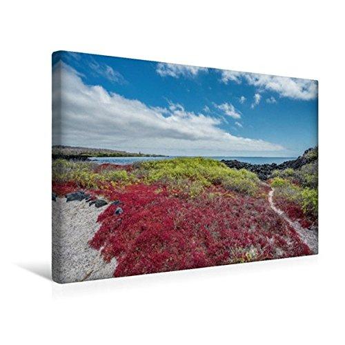 Calvendo Premium Textil-Leinwand 45 cm x 30 cm Quer, Isla Floreana | Wandbild, Bild auf Keilrahmen, Fertigbild auf Echter Leinwand, Leinwanddruck Orte Orte