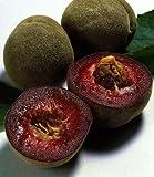 Roter Weinbergpfirsich Busch. 1 Pflanze - zu dem Artikel bekommen Sie gratis ein Paar Handschuhe fŸr die Gartenarbeit dazu