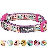 Blueberry Pet Statement Nachteulen Designer Hundehalsband, Hals 37cm-50cm, M, Verstellbare Halsbänder für Hunde