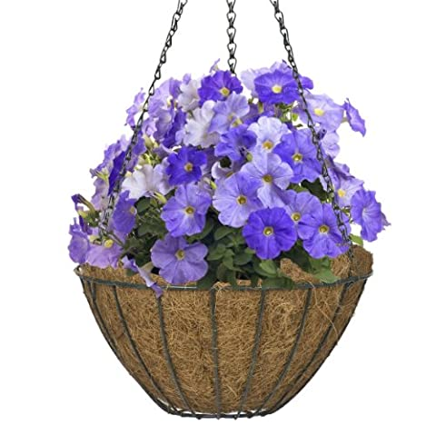 CobraCo Hunter Green 14-Inch Growers Style Hanging Basket