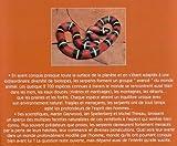 Image de Serpents
