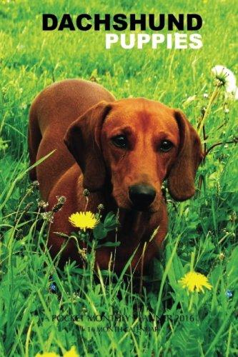 Dachshund Puppies Pocket Monthly Planner 2016: 16 Month Calendar