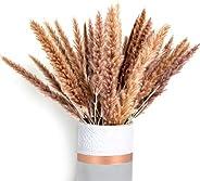Phoenix Décor Dried Pampas Grass - Premium Natural Dried Pampas Grass for Home Decor, A Great Decorative Grass