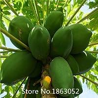 Promoción 20 unidades/bolsa maravilloso dulce Papaya semillas Kakdam tropical subtropical semillas de frutas subárticas semillas de flores