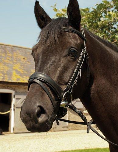 Heritage Zaumzeug, englisches Leder & Gummi Grip Zügel Havana Pony
