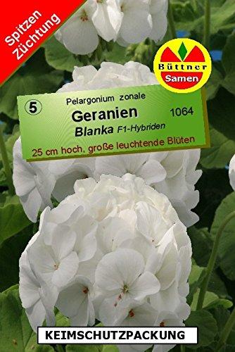 geranien-pelargonium-zonale-blanka-f1-10-korn-frische-samen