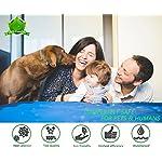 flea and tick collar for dogs, waterproof dog anti flea collar, natural & safe Flea and Tick Collar for Dogs, Waterproof Dog Anti Flea Collar, Natural & Safe 51UeaI4QOUL
