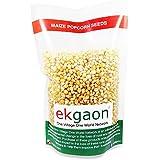 Ekgaon Maize Popcorn Seeds,300 gms