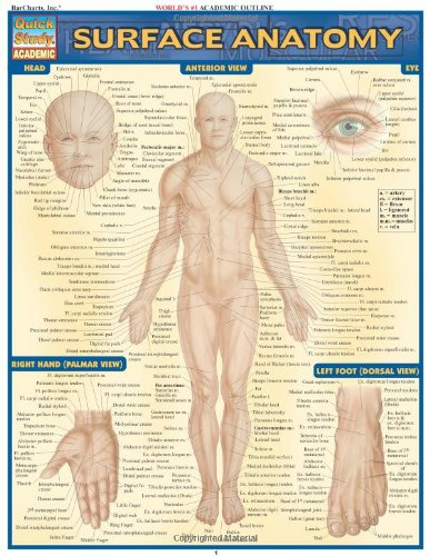 Surface Anatomy: Reference Guide (Quickstudy: Academic)
