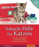 Schnelle Hilfe für Katzen