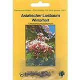 Bonsai - 10 Samen Asiatischer Losbaum, Clerodendrum trichtomum 90097