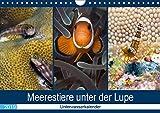 Meerestiere unter der Lupe - Unterwasserkalender (Wandkalender 2019 DIN A4 quer): Erleben Sie die farbenfrohe fantastische Welt unter Wasser! (Monatskalender, 14 Seiten ) (CALVENDO Tiere)