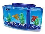 Penn-Plax Triple Aquarium pour Betta Deluxe pour Aquariophilie