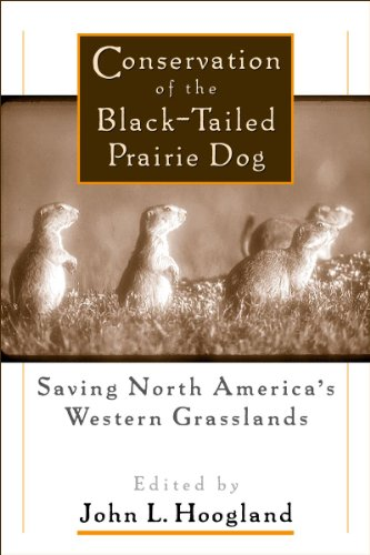 Conservation of the Black-Tailed Prairie Dog: Saving North America's Western Grasslands (English Edition) - Black-tailed Prairie Dog