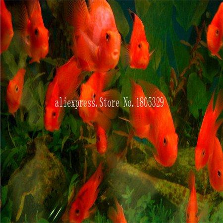 FARMERLY Samen Paket: Seedss Aquarium Aquarium Dekoration s Samen Seedss Samen 100seeds / bag: 4 (Fish Tank Dekorationen Billig)