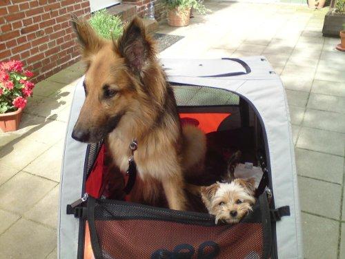 Petego Comfort Wagon L – Hunde Fahrradanhänger - 6
