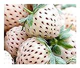 Weisse Erdbeeere - Ananas Erdbeere - 30 Samen