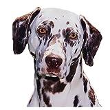 New Dalmatiner Hund Halsband–Groß Größe–40cm bis 50cm/15,7bis 50cm