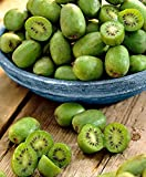 Keland Garten - 50pcs Selten Kiwi 'Issai' Grün/Rosa - Kletterpflanze Obstsamen...