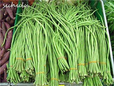 8 Pcs Multi Color haricots desserrées graine long des haricots semences Graines de plantes en pot poussent plus vite Fleurs vivaces Jardin Plante 13