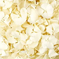 1 Pint of Snowy White Freeze Dried Hydrangea Petal Confetti by Truly Madly Deeply