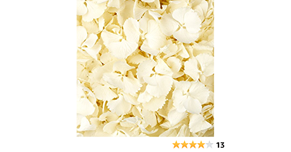 1 Pint of Lush Green Freeze Dried Hydrangea Petal Confetti by Truly Madly Deeply