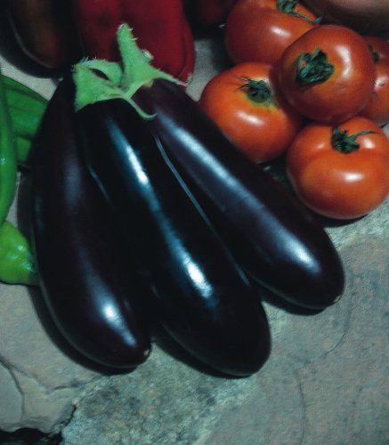 Just Seed???Violet aubergine???Long???750?graines