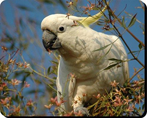 Kakadus Vögel Mauspad 15 (Flying Käfig)