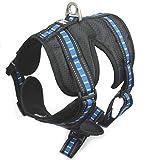Brother CATDOG Premium Hundegeschirr   Gepolstert und Atmungsaktiv   Reflektierende Elemente   Brustgeschirr für kleine und große Hunde   Verstellbare Gurte   Laufgeschirr   Sicherheitsgeschirr (M, Blau)