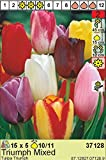 AUSVERKAUF : Prächtige Tulpen Mischung 50 Blumenzwiebeln Gr.11/12