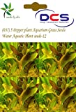 DCS(037) 5 Pepper plant Aquarium Grass S...