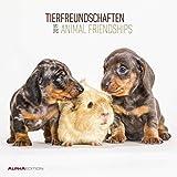 Tierfreundschaften 2019 - Animal Friends - Broschürenkalender (30 x 60 geöffnet) - Tierkalender - Wandplaner