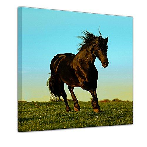 Wandbild - Pferd - Bild auf Leinwand 40 x 40 cm - Leinwandbilder - Bilder als Leinwanddruck - Tierwelten - Natur - Hengst im Galopp