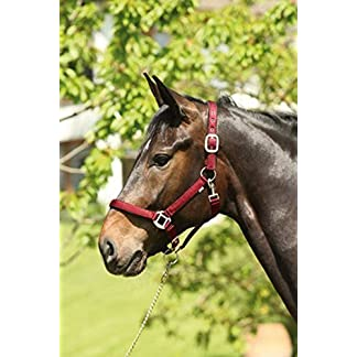 """Happy Horse"" equine play ball 51Un3kdOtRL"