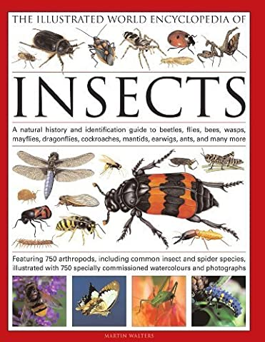 The Illustrated World Encyclopedia of Insects: A natural history and