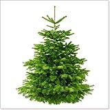 Echter Weihnachtsbaum - Nordmanntanne -aus dem Sauerland 170-190 cm -