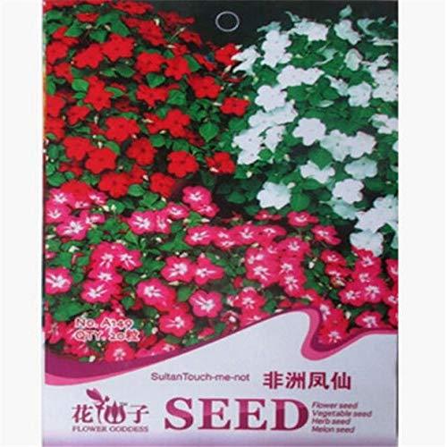 Portal Cool Fd1626 Impatiens Walleriana Semi di balsamina africana giardino di fiori 20 seme A