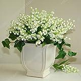 100 PC / pack Japanische Radiata Samen weißer Reiher Orchid Seeds Welt Seltene Orchideen-Arten Weiße Baison Blumen Orchidee Garten Orchid Samen