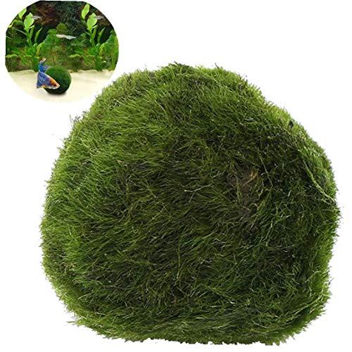 Angoter Falso Green Moss Artificiale Palla per Acquari E Terrari Decorazioni Pianta Crescente