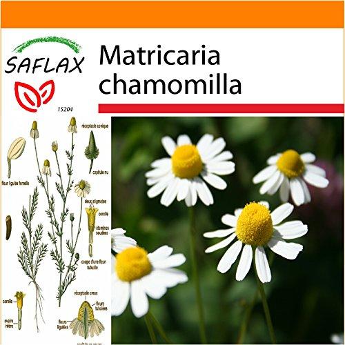 Galleria fotografica SAFLAX - Garden in the Bag - Camomilla - 300 semi - Matricaria chamomilla